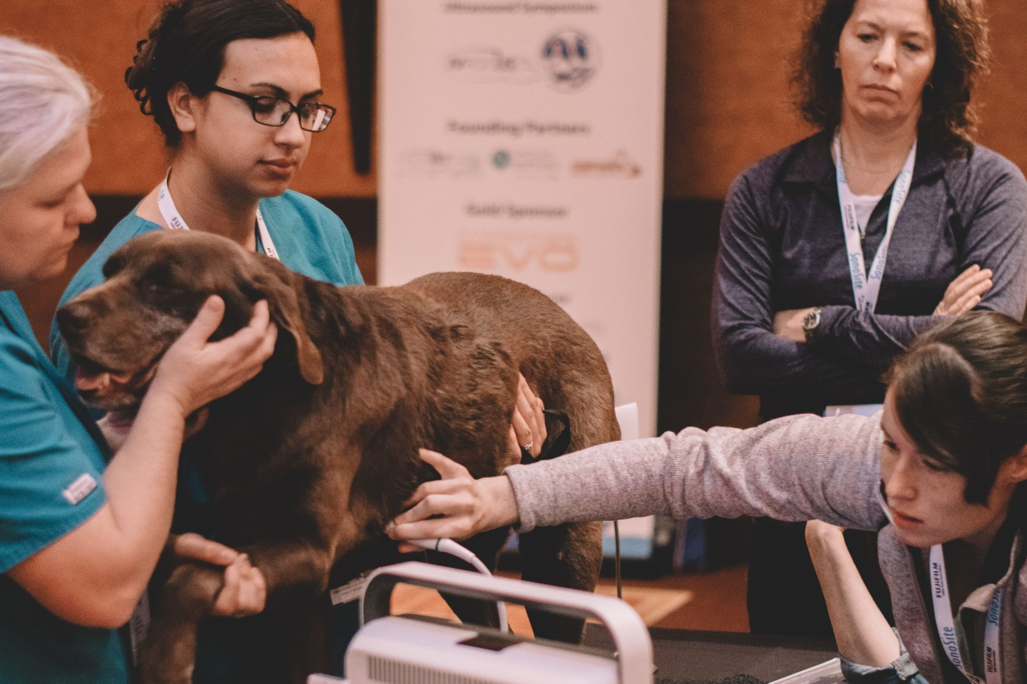 Small Animal Ultrasound Education & Support