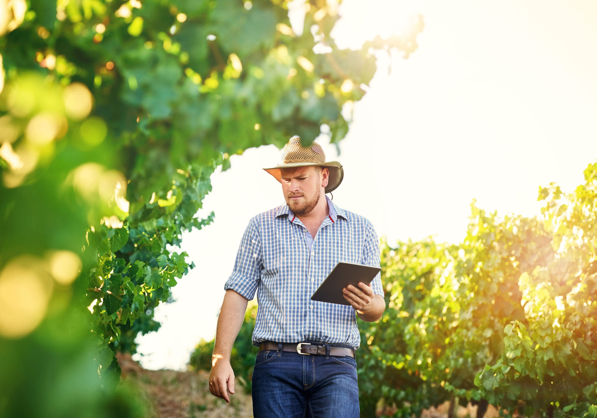 Cropped shot of a farmer using a digital tablet while doing his rounds