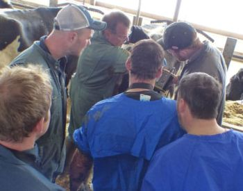 Bovine ultrasound training