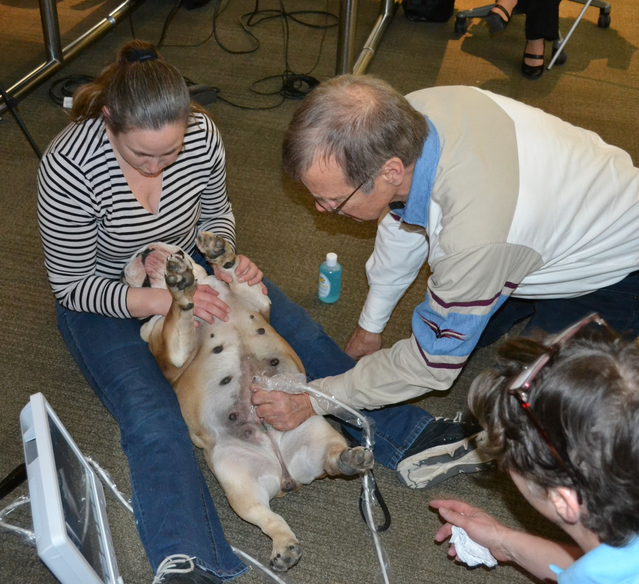 pettech-ultrasound-training-11