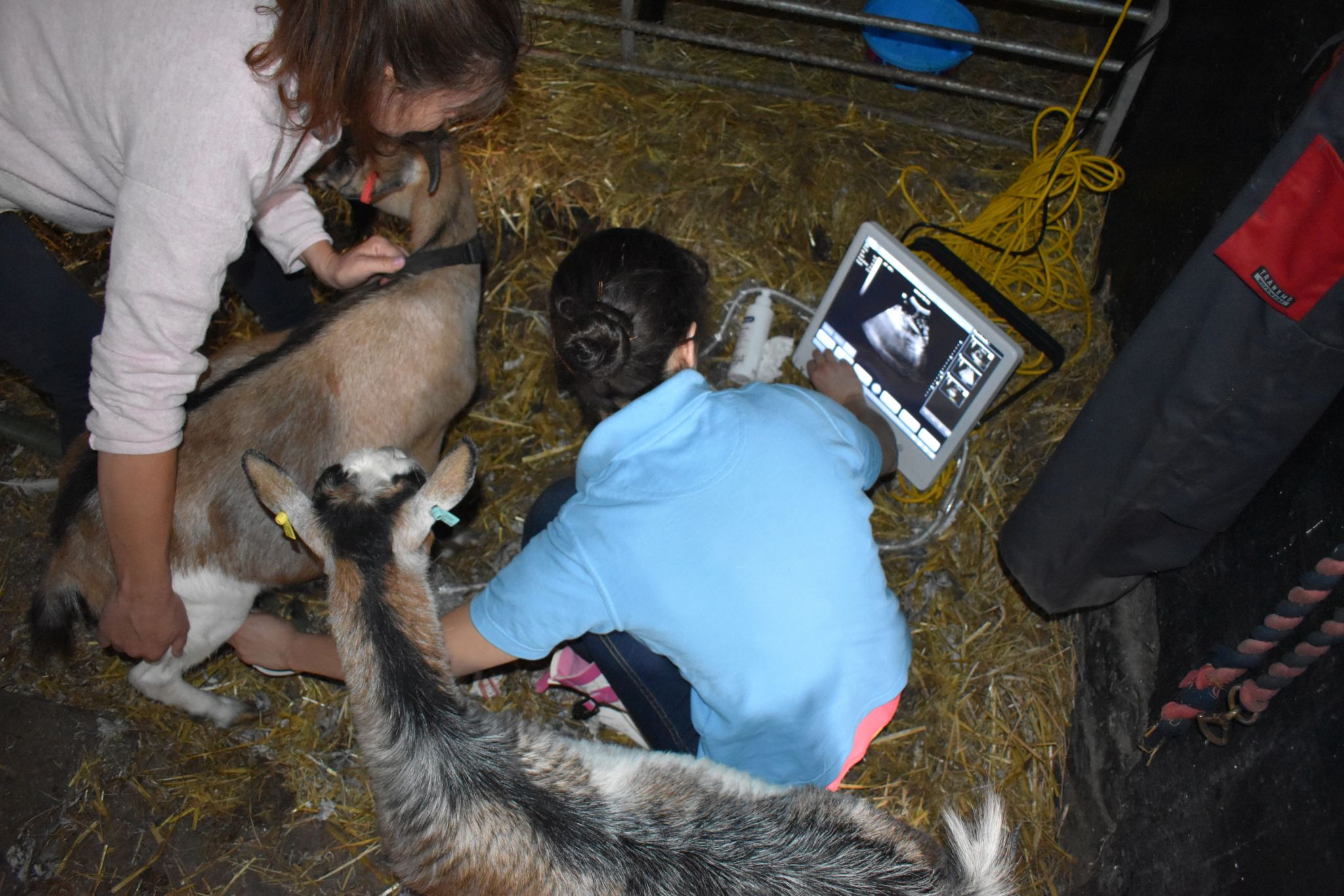 goat-pregnancy-ultrasound-machine-for-sale